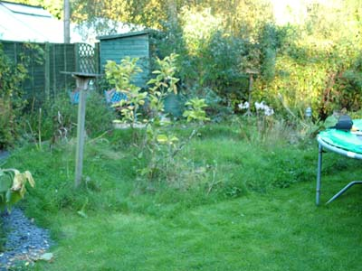 Before landscaping a natural stone wildlife pond in Devizes