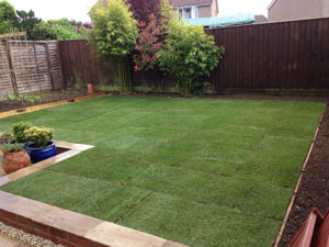 The garden after laying a new lawn