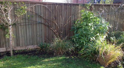 New quality fence and Solanum tied in